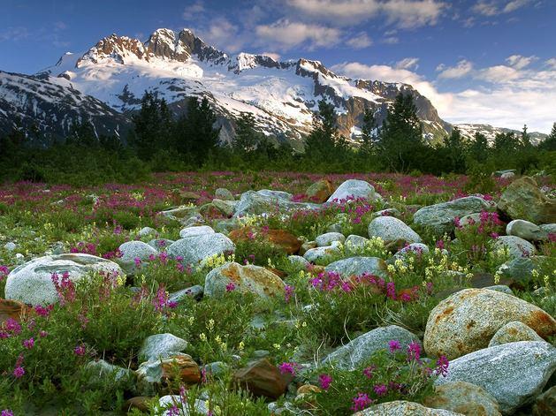 Ландшафт в цветах: зеленый, серый, светло-серый, розовый, темно-зеленый. Ландшафт в стилях: средиземноморский стиль, экологический стиль.