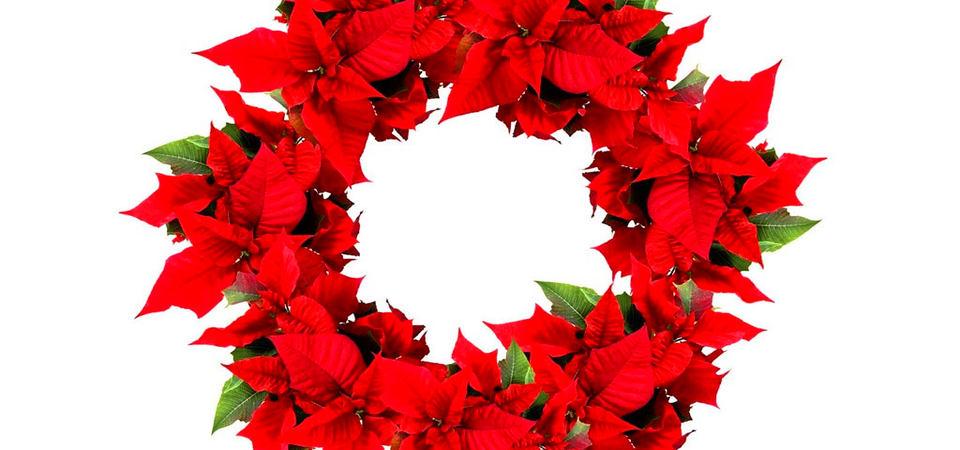 5 самых популярных горшечных цветов, которые дарят на Новый год