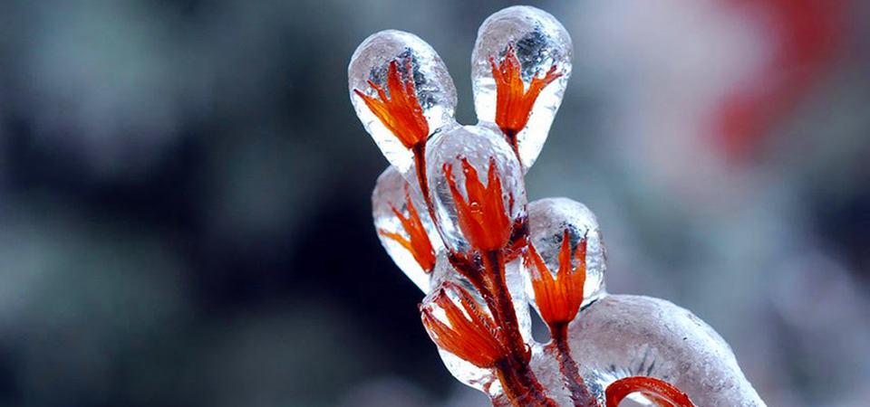 25 идей новогодних украшений, которые создала сама природа