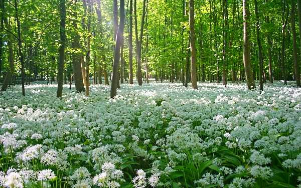 Ландшафт в цветах: зеленый, белый, темно-зеленый, салатовый, коричневый. Ландшафт в .