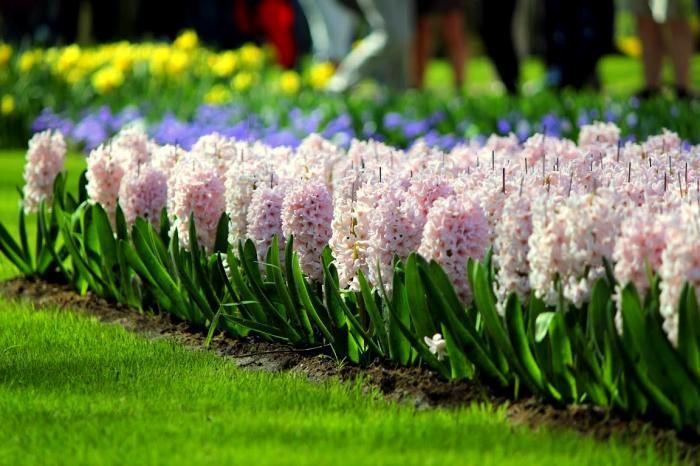 Ландшафт в цветах: зеленый, серый, светло-серый, розовый, темно-зеленый. Ландшафт в .