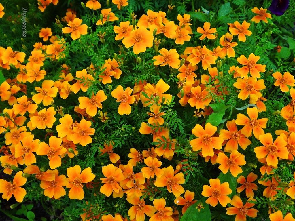 Ландшафт в цветах: оранжевый, темно-зеленый, коричневый, бежевый. Ландшафт в стиле кантри.