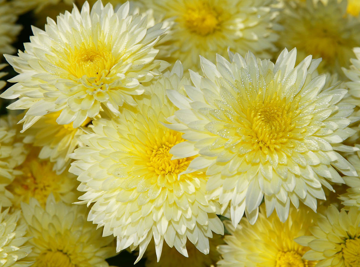 Фото в цветах: светло-серый, салатовый, бежевый. Фото в стиле кантри.