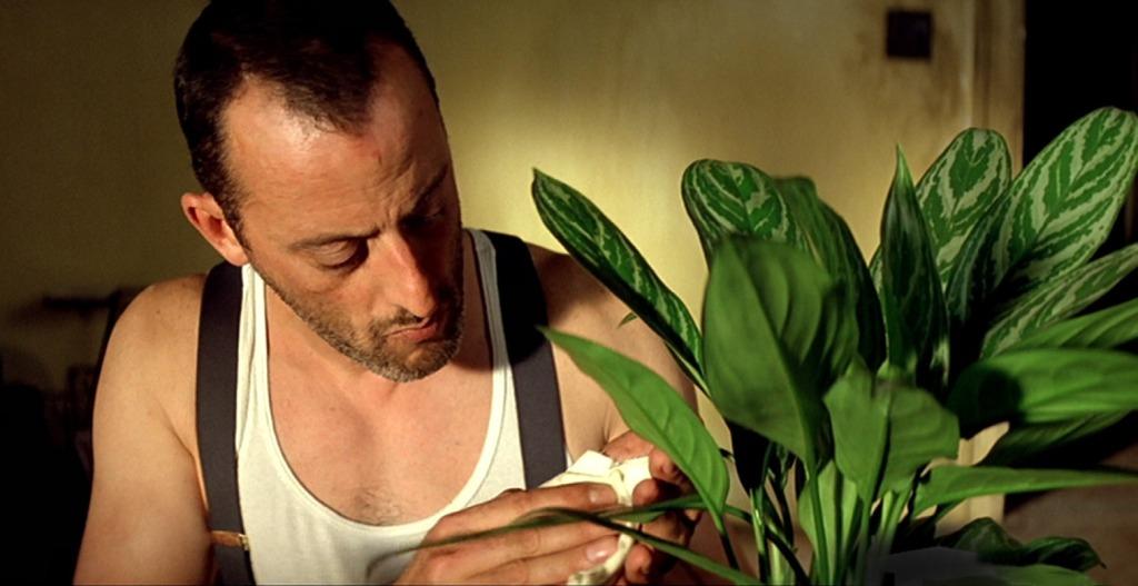10 суровых домашних растений для настоящих мужчин