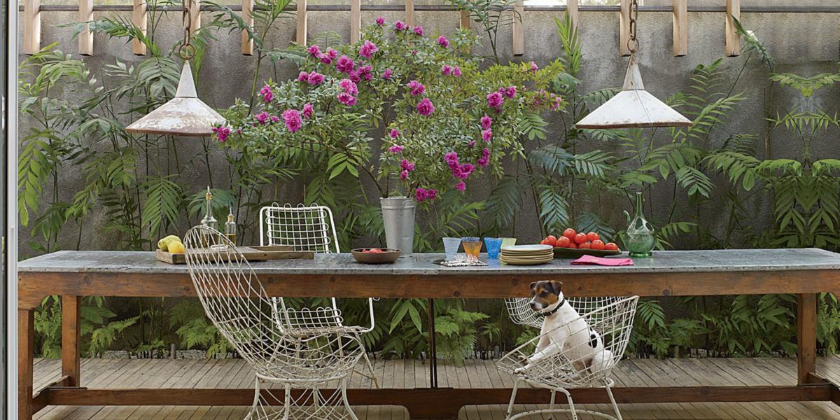 Выращиваем зимний сад в доме: 5 советов и 20 идей