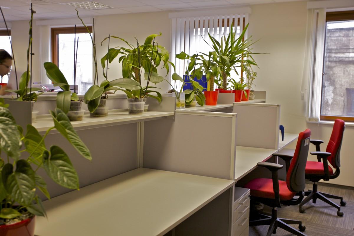 Рабочие помещения open-space мы решили в серо-бежевой гамме. Расставленные растения в красных кашпо придают жизнерадостности.