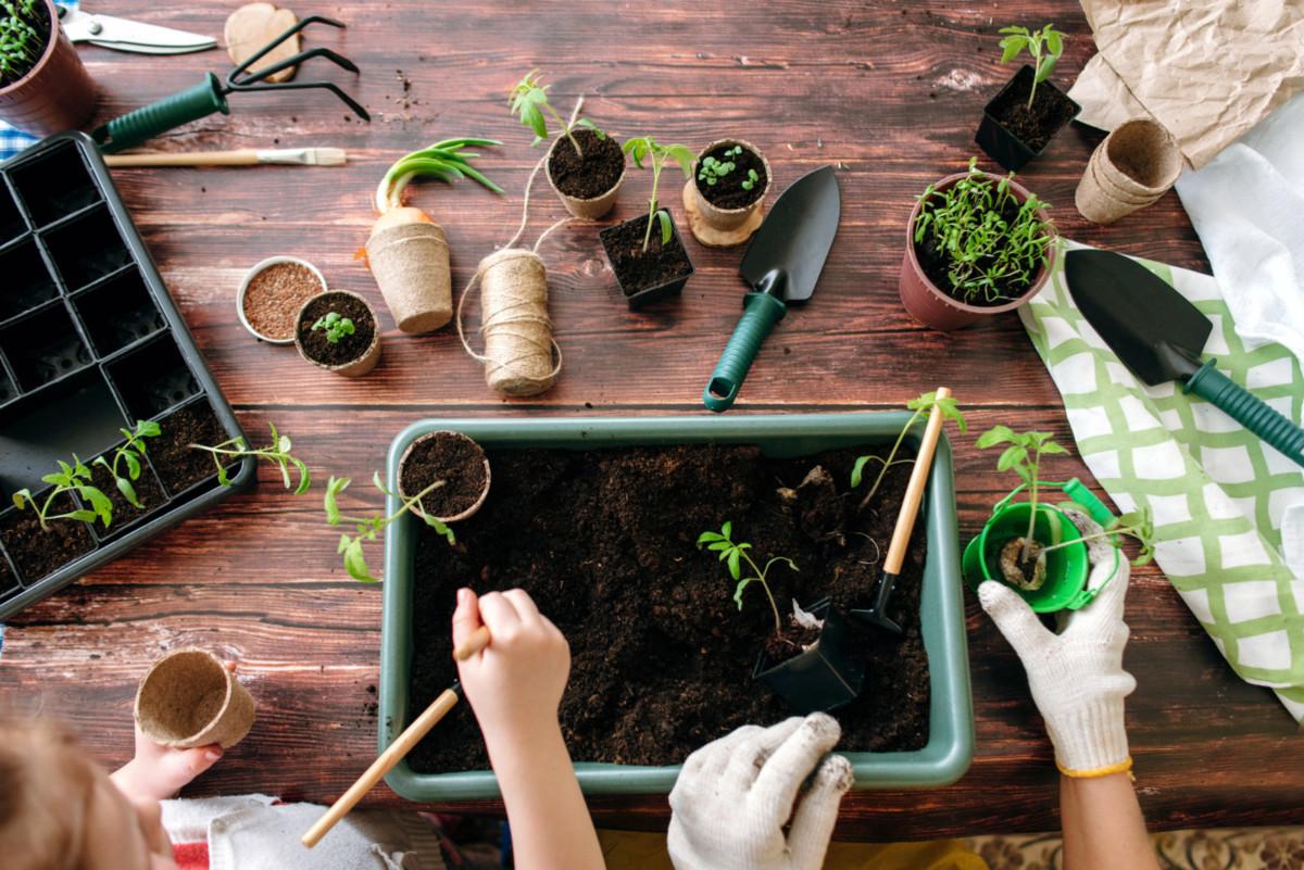 Как вырастить рассаду для дачи самостоятельно