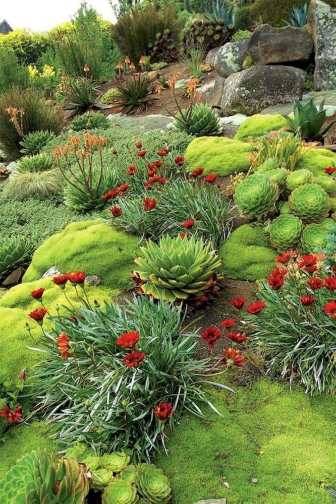 Альпийская горка своими руками: какие растения выбрать для альпинария