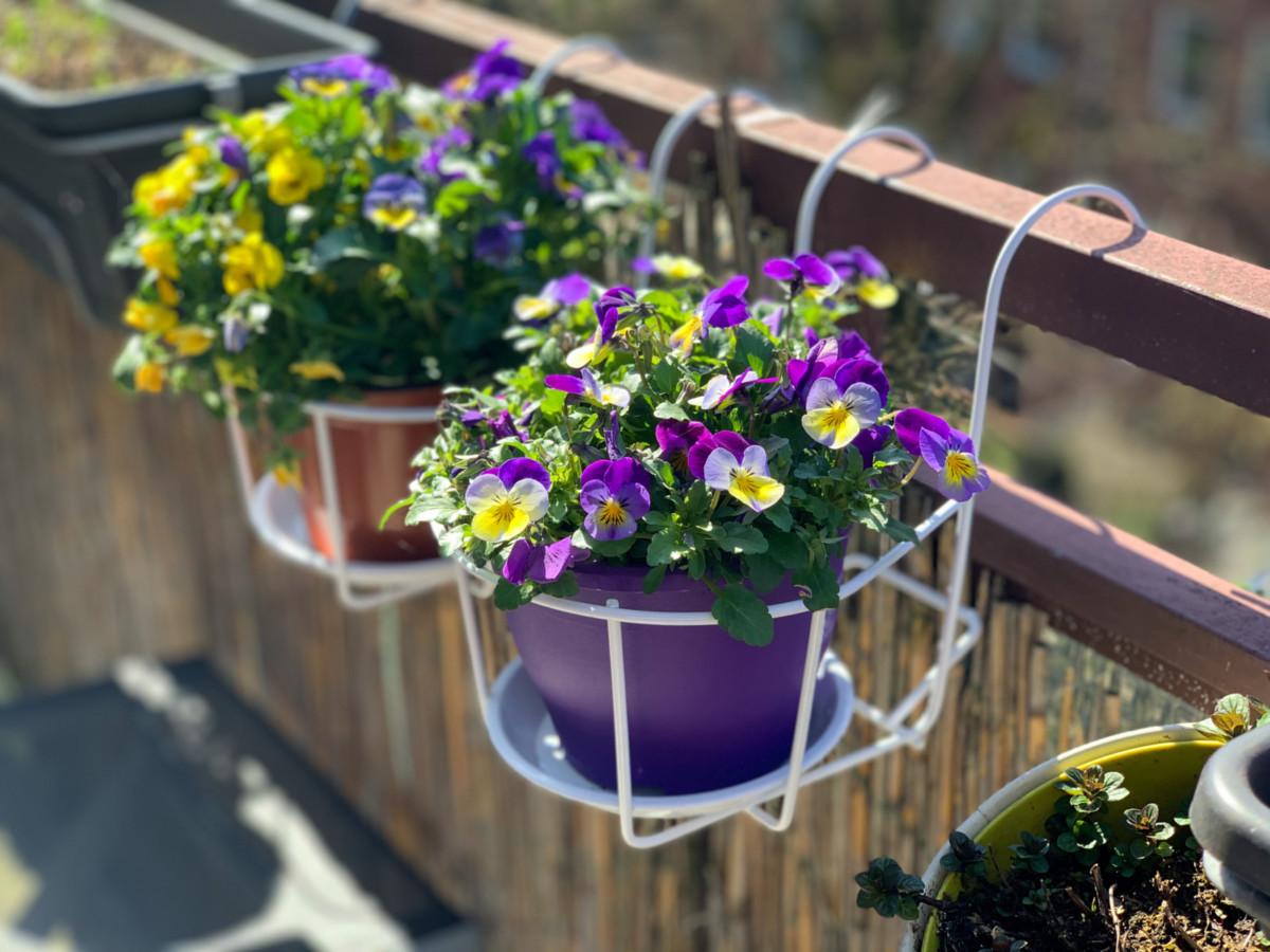 Цветущий балкон: 40 идей оформления балконного сада и 10 важных нюансов