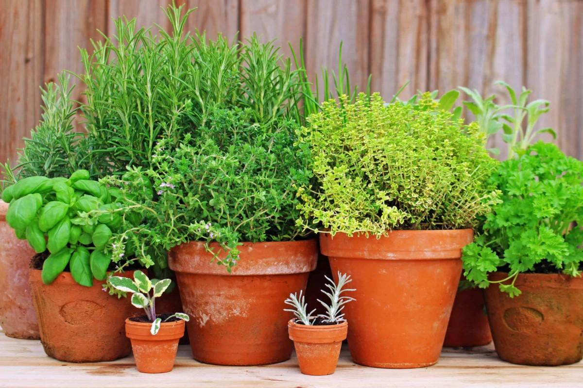 10 видов зелени для выращивания на балконе: домашний огород
