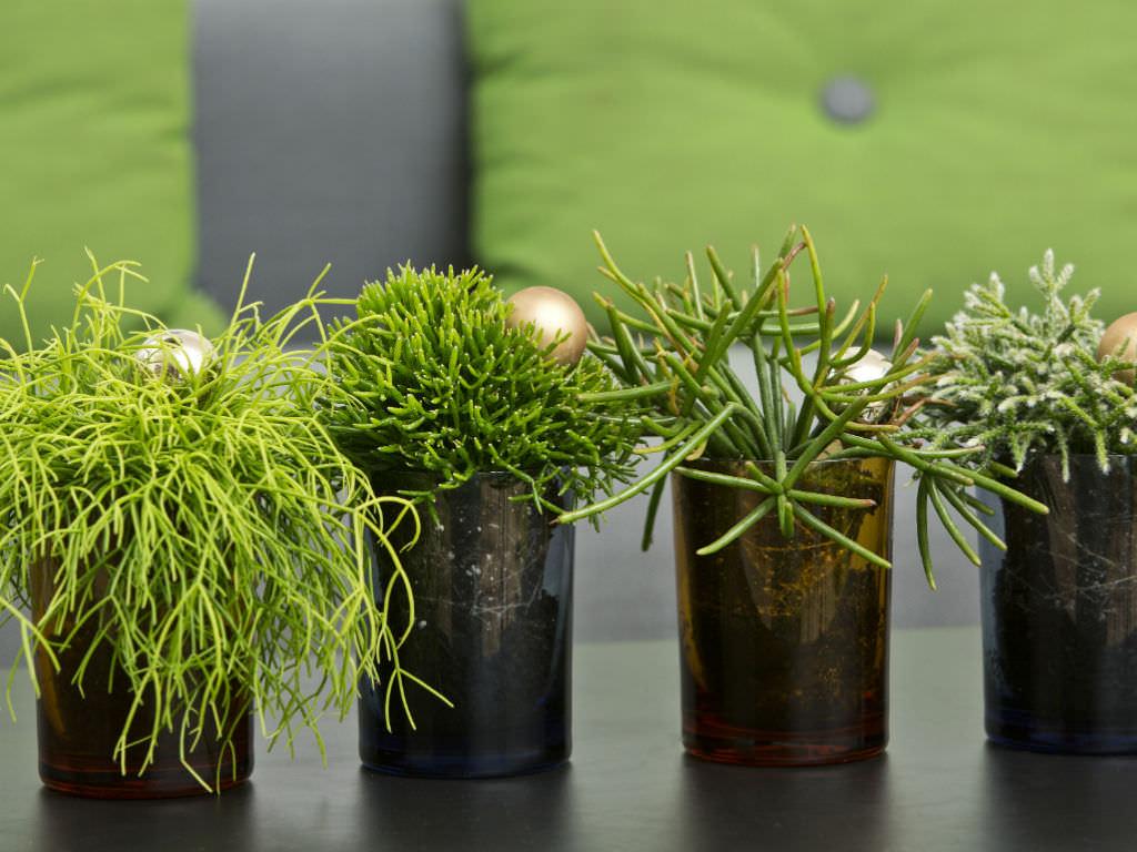 Оазис в ванной: 13 неприхотливых растений для домашнего спа